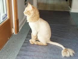 Нужно ли стричь домашнего кота или кошку