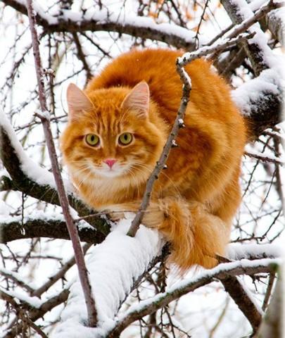 Бешенство у животного как распознать