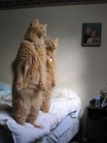Может ли кот убить человека?