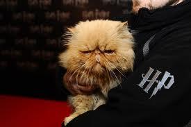 Hermione-s-Cat-Crookshanks-hermione-granger-29495953-275-183