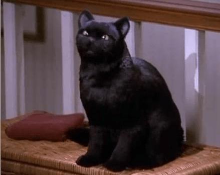 Salem_The_Cat