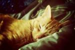 Сколько часов спит кошка