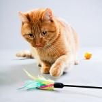 Игрушки для кошки – купить или сделать самостоятельно?