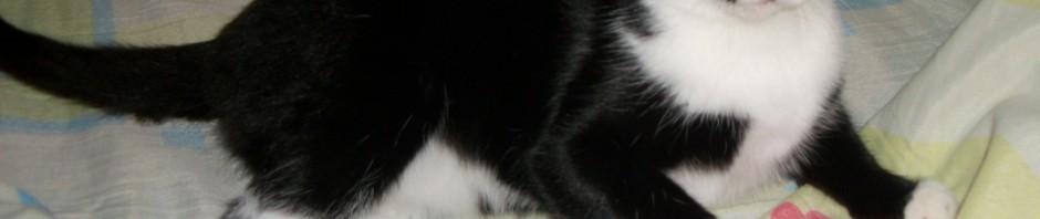 фото котенок черно белый красивый игривы