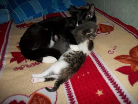 две кошки весело борются на фото