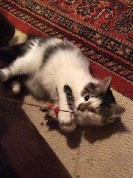 фото кота одноглазого играется