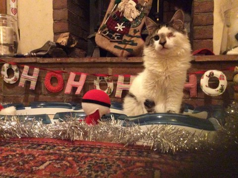 ноовгодняя мишура котенок сидит на полу