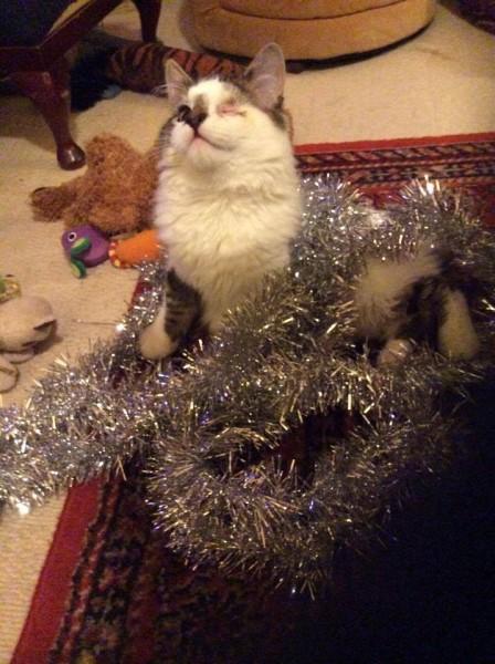фото котенок с мишурой новогодней