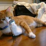 фото кошка рыжая смотрит е втелефон