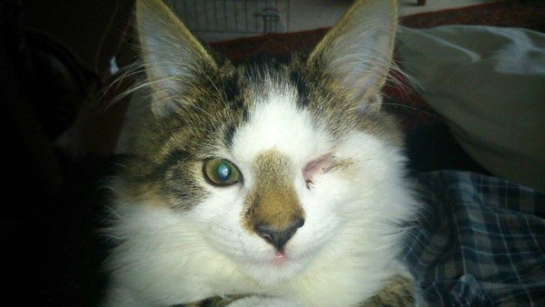 фото кот с одним глазом