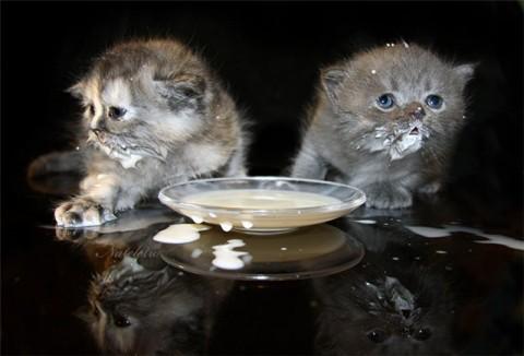 почему кот не пьет воду
