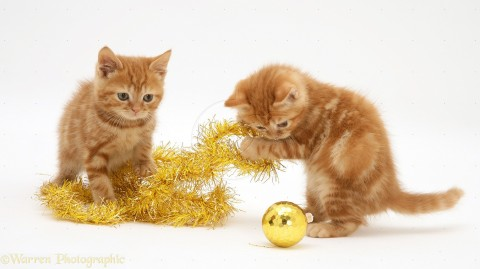 Red tabby kittens with Christmas tinsel and bauble