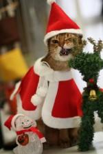 Елка, кошки и Новый год