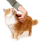 Что делать, когда кошка линяет?