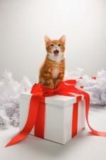 Что подарить котенку на новый год?