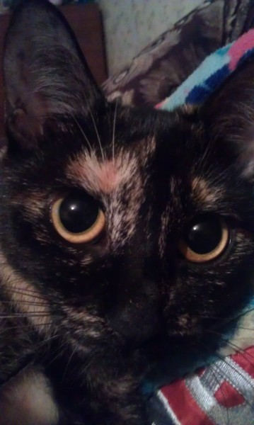 фото кошки с большими глазами