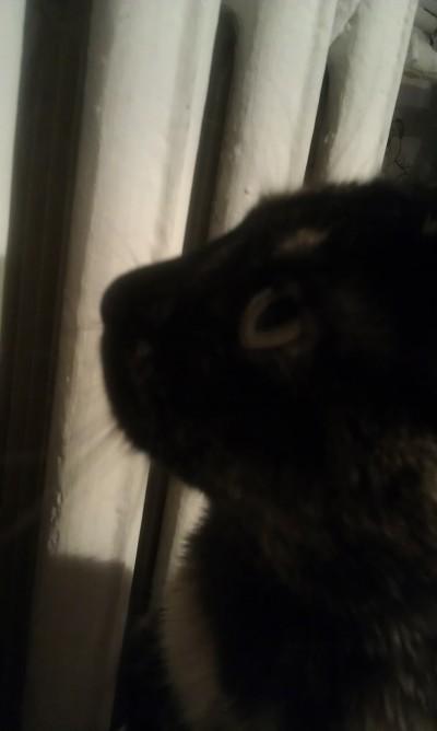 кошка красивая на фото стоит у батареи и смотрит