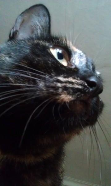 фото кошки усы