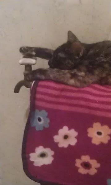 картинка кошки спящей на батарее с одеялом теплым довольная