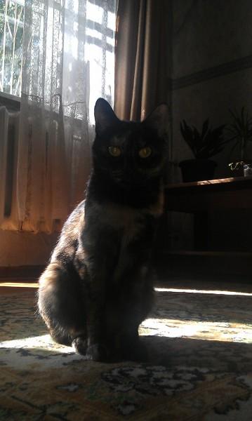 мистическая кошка красивая