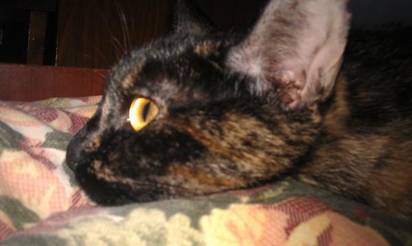 кошка милая лежит на фото