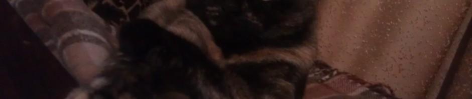 кошка на фото красивая любимая