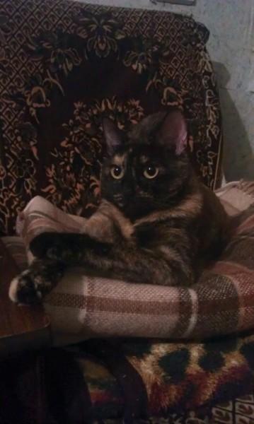 кошка на фото лежит на диване и смотрит вдаль серьезно