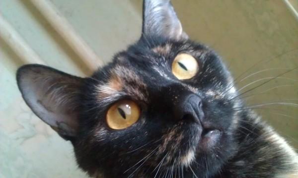 уши торчком удивительные кошачьи глаза на фото