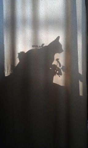 фото кошки тень красивая мистика