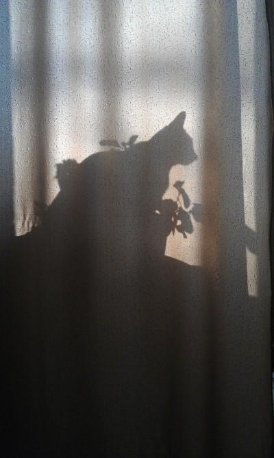 фото тень силуэт на занавеске