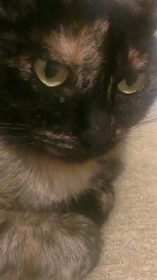 глаза кошки желтые усы топорщатся
