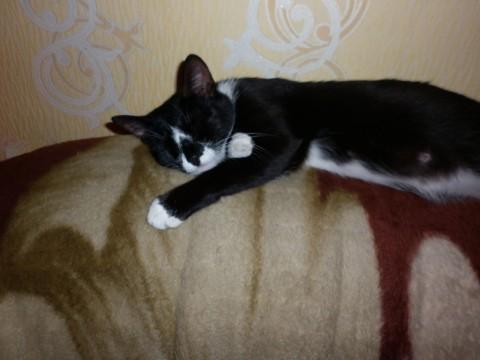 фото кошка маруся спит