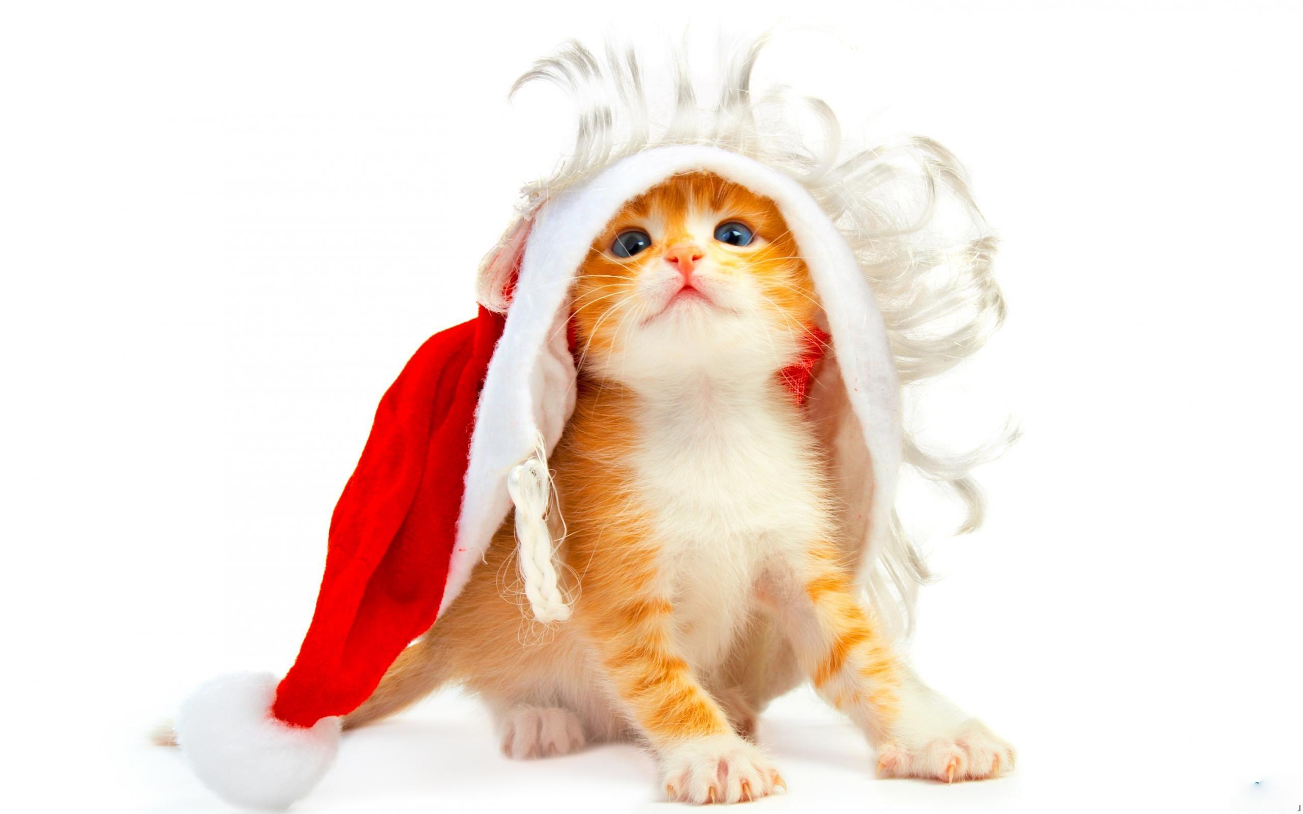 Поздравления подарок котенок фото 870