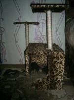 Отзыв о домике для кошки