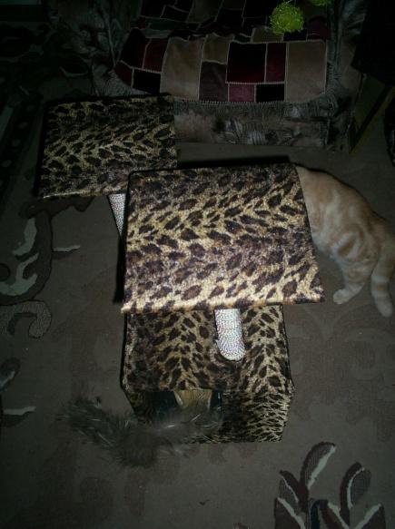 фото отзыв для кошки красивый леопардовый