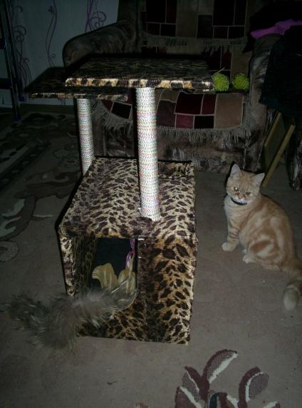 домик для кошки отзыв фото