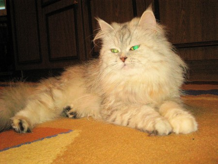 фото кошка пуся пушистая с зелеными глазами