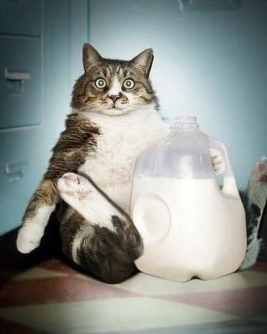 почему кот не пьет