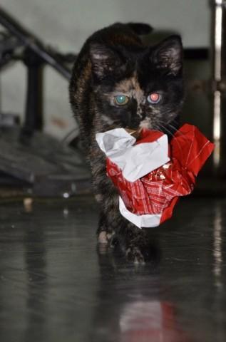 кошка как дикий хищник несет бумажку