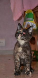 Кошка по кличке Зайка