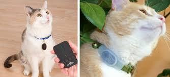 гаджеты слежения за кошкой
