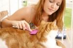 Уход за шерстью кошек, пушистых красавиц