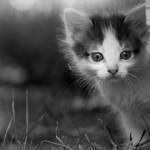 красивый котенок возле березы смотрит осторожно