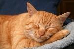 Правда ли, что коты живут меньше, чем кошки?
