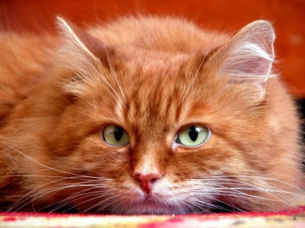 определение возраста кота