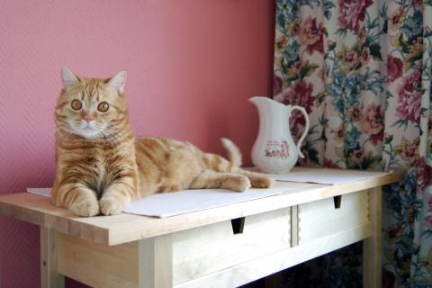 кот красуется на столе