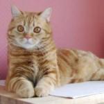 Как выбрать имя для кота