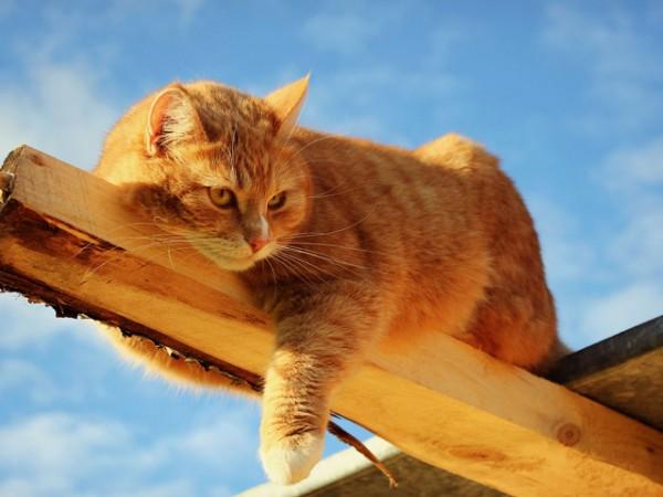 избавиться от кошачьего запаха в доме