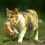 Почему кошки переносят котят?