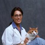 Почему кошку тошнит? Опасные и «неопасные» причины